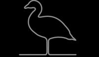 greygoose